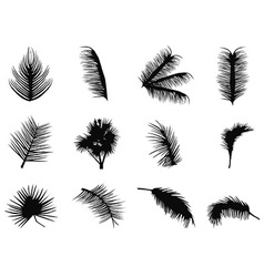 palm tree leaves silhouettes vector image