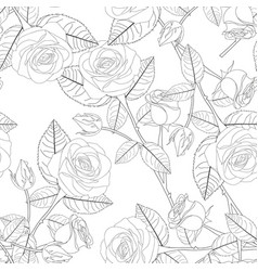 Rose on white background vector