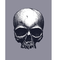 Black and white human skull vector