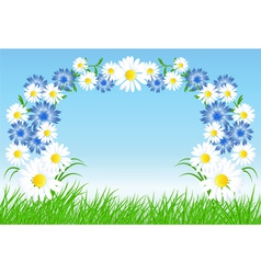 Cornflowers and daisy vector