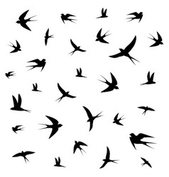 birds circling vector image vector image