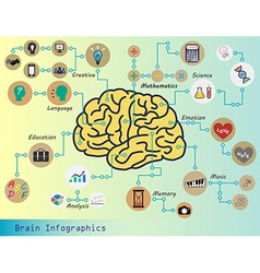 Brain Infographic vector image vector image