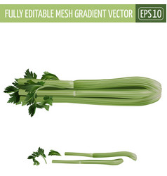 Celery on white background vector