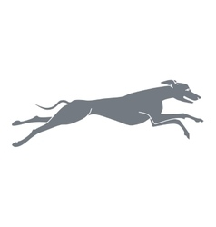 Silhouette of running dog whippet breed vector