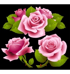 Pink roses set vector image