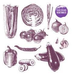 hand drawn vegetables set vector image vector image