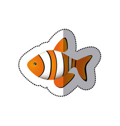 Sticker colorful picture clownfish acuatic animal vector