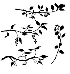 Set of tree branches with leaves and berries vector
