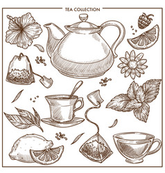 Tea collection sketch icons of cups teapot vector