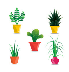 Collection of room plants in pots vector