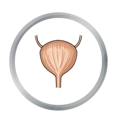 Human urinary bladder icon in cartoon style vector