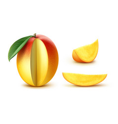 sliced mango vector image