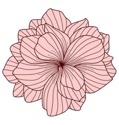 Pink begonia flower on white background vector