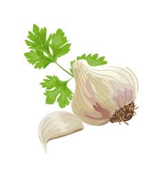 garlic and parsley vector image vector image