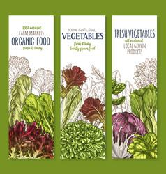 leaf vegetable sketch banner set of salad greens vector image vector image