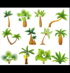 tropic palm trees isolated exotic palm tree set vector image vector image