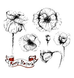 Poppy flowers sketches in different positions vector image