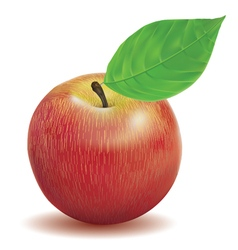 Apple red color vector