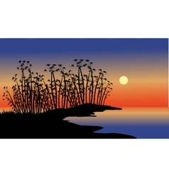 Silhouette of bamboo tree in beach vector