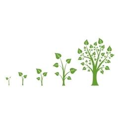 Tree growth diagram vector image vector image