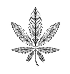 Marijuana ethnic graphic style cannabis vector