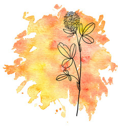Flower of clover at watercolor background vector