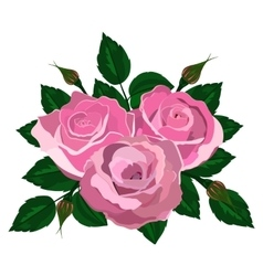 bouquet of pink roses on a white background vector image vector image
