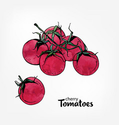 Branch of cherry tomatoes hand drawn colorful vector