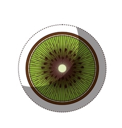 Delicious kiwi fruit isolated icon vector image