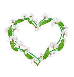 White crape myrtle flowers in a heart shape vector