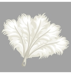 White feather fan vector