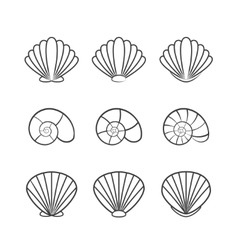 Set of sea shells isolated on a white background vector