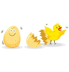 Egg and little chick vector image