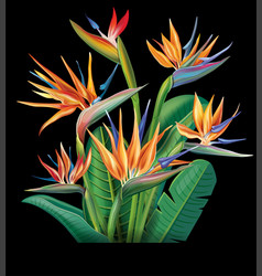 floral bouquet with strelitzia flowers vector image