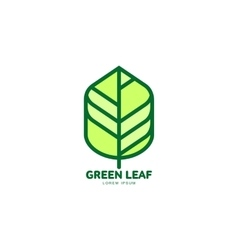 Green leaf growing up logo template vector