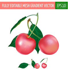 Pink cherry on white background vector