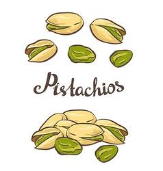 Pistachio nuts vector