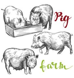 Farm pig set hand drawn vector