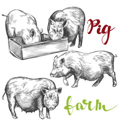 farm pig set hand drawn vector image