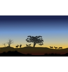 Scenery at morning with antelope and zebra vector