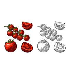 set of hand drawn tomatoes branch whole and vector image