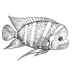 Tropical fish - hand drawing vector