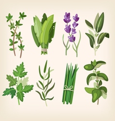 Seasoning and dressing herbs vector image