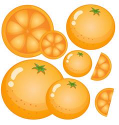 fresh oranges on white background vector image vector image