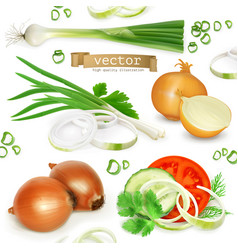 Onion set realistic icons vector