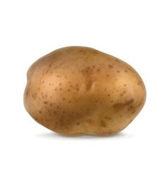 Potato vector image