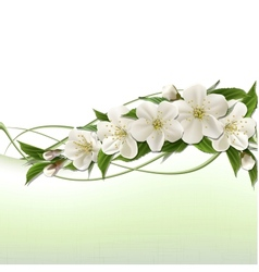 Spring background with white cherry flowers vector image vector image