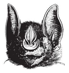 Javelin bat vintage vector