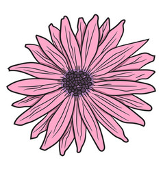 Pink gerbera drawing by hand vector