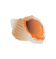 Seashell eps10 vector